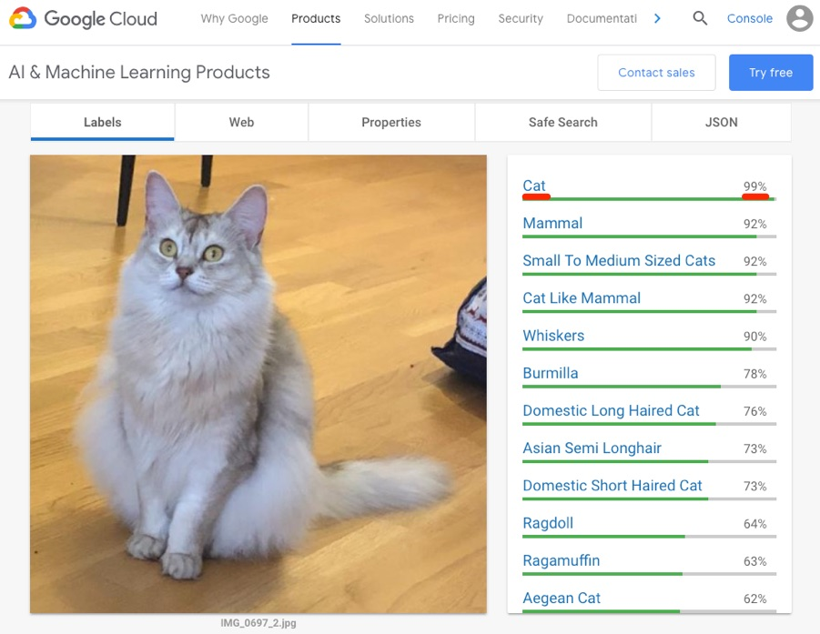 google vision api cat